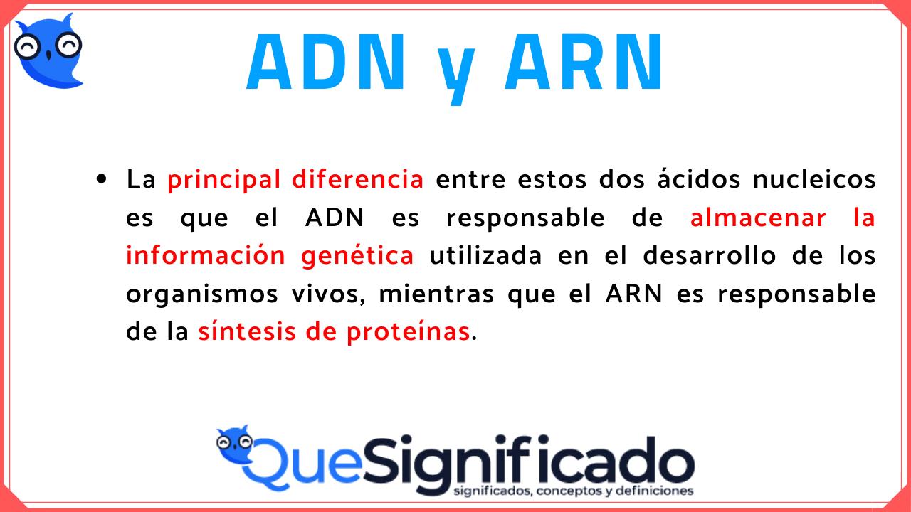 Diferencias Entre Adn Y Arn Estructuras Funciones Características