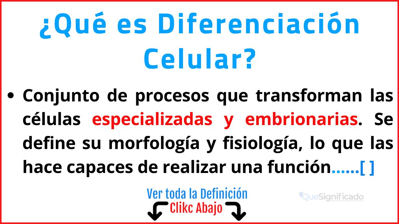 Qué es Diferenciación Celular