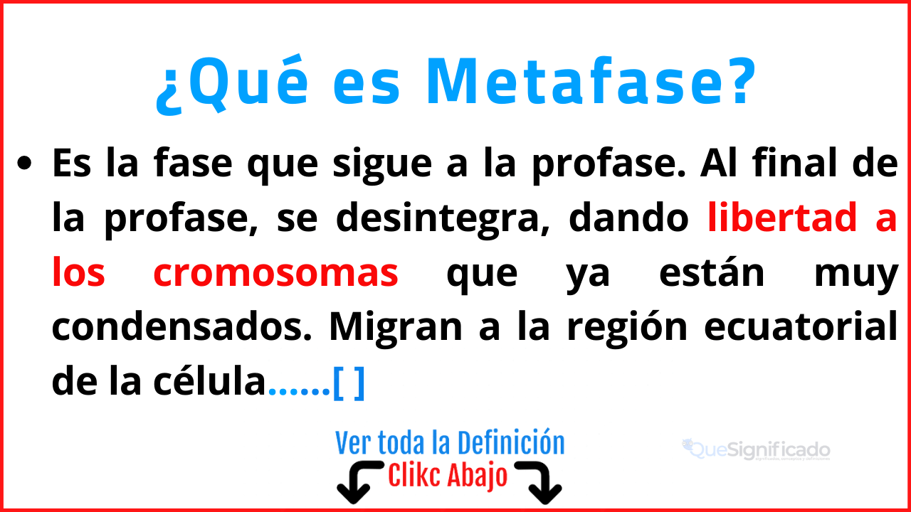 Qué es Metafase
