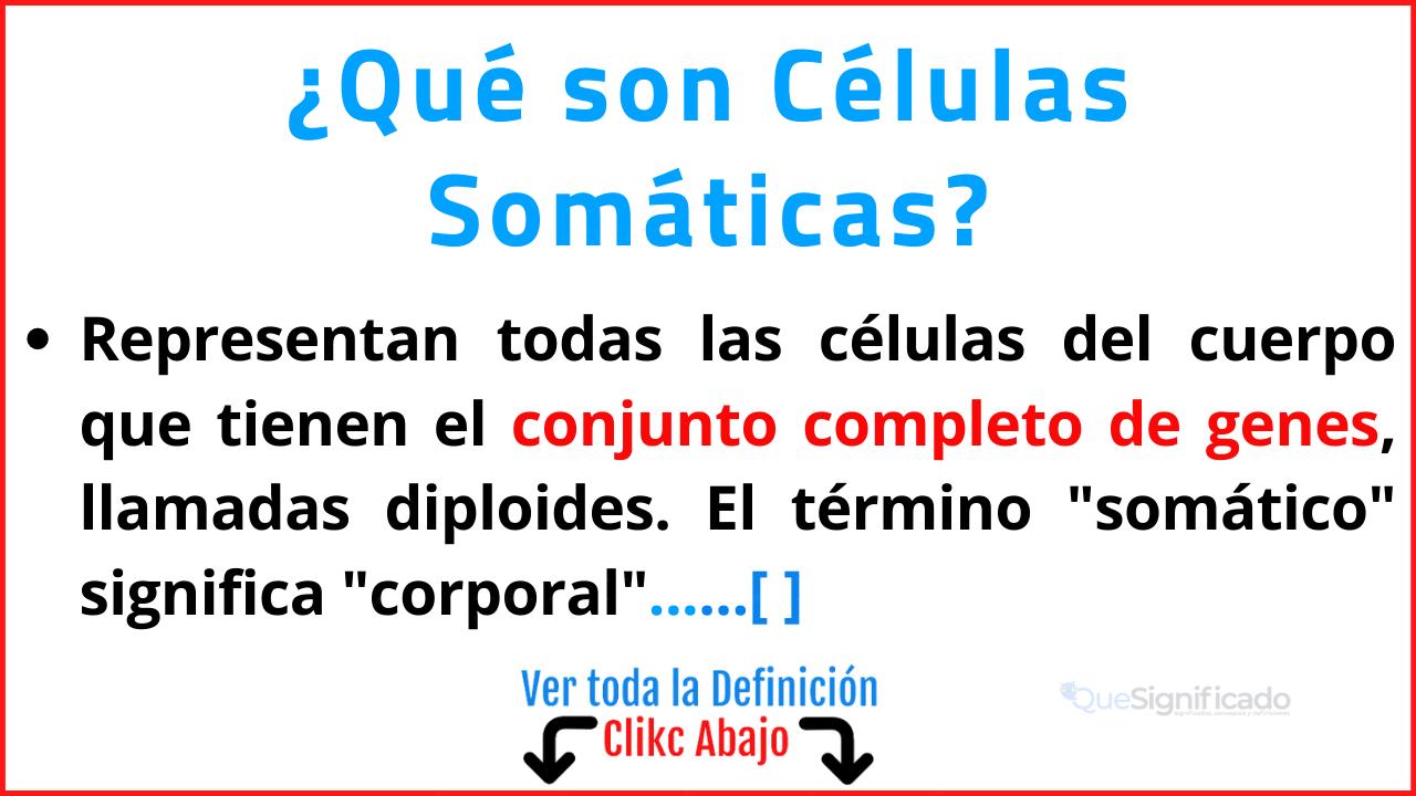 Qué son Células Somáticas