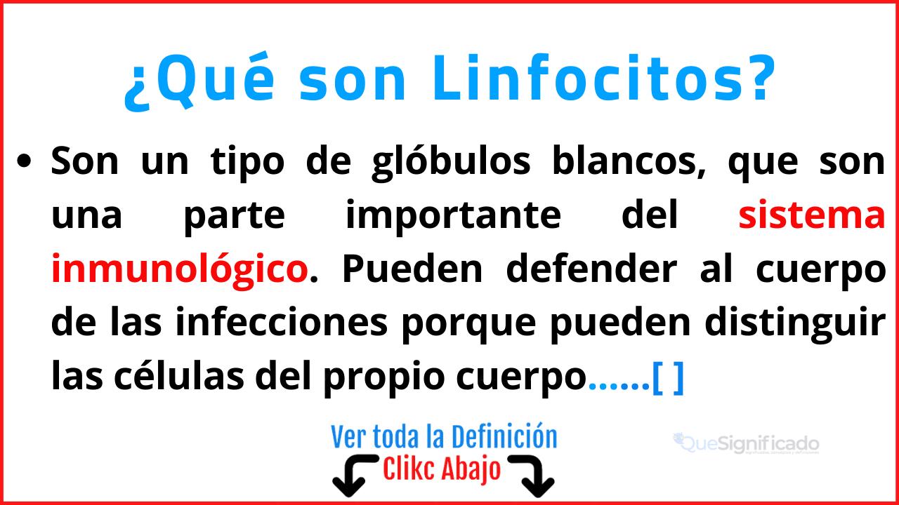 Qué son Linfocitos
